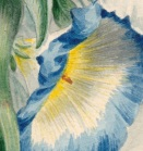 Bouquet detail morning glory close
