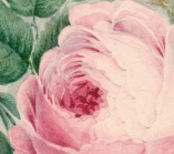 Bouquet detail rose closoe up