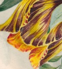 Bouquet detail tulip close