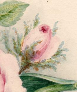 Rose detail bud